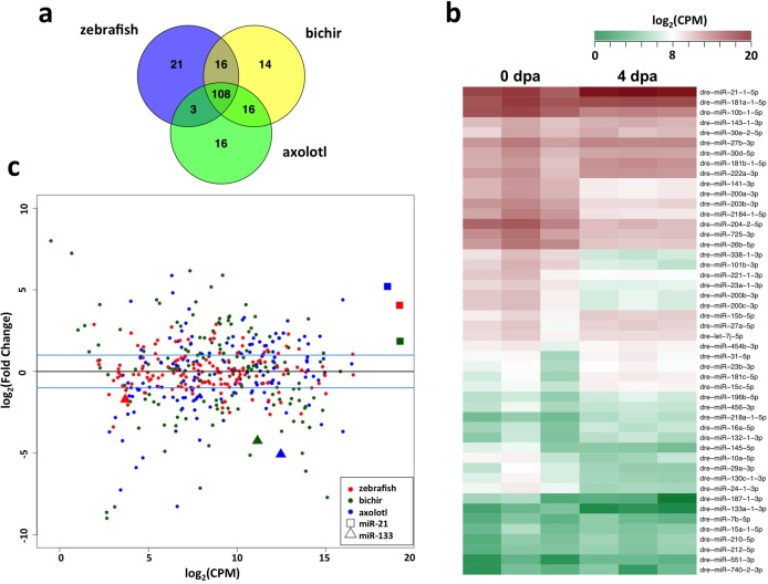 miRNA expression profiling by small RNA sequencing. (a) Overview of shared and unique miRNAs detected in regenerating limb/appendages following blastema formation in zebrafish caudal fin, bichir pectoral fins and axolotl forelimbs. (b) Gene expression patterns of differentially expressed zebrafish miRNAs shown as a heat map of log 2 -transformed read counts per million, in triplicate. (c) Relationship among fold-change and average level of expression for each miRNA in each taxa with miR-21 and miR-133. (dpa = days post-amputation).