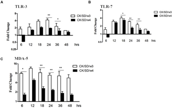 TLR-3, TLR-7, and MDA-5 mRNA levels at various time points post-infection. TC-1 cells were infected with CK/SD/w3 and CK/SD/w4 at MOI = 1. qRT-PCR were used to examine the mRNA levels and fold-changes was calculated by 2 -ΔΔCt method as compared with non-infection cell control and using endogenous β-actin mRNA level for normalization. (A) The fold change of TLR-3 in mRNA levels; (B) The fold change of TLR-7 in mRNA levels; (C) The fold change of MDA-5 in mRNA levels. The data was shown the as mean ± SE from three sets of independent experiments. ∗ P