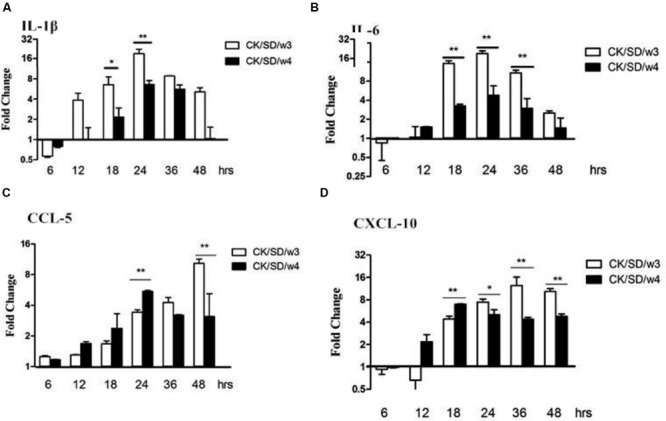 Cytokine and chemokine mRNA levels at various time points post-infection. TC-1 cells were infected with CK/SD/w3 and CK/SD/w4 at MOI = 1. qRT-PCR were used to quantify the mRNA levels and fold-changes was calculated by 2 -ΔΔCt method as compared with non-infection cell control and using endogenous actin mRNA level for normalization. (A) The fold change of IL-1β in mRNA levels; (B) The fold change of IL-6 in mRNA levels; (C) The fold change of CCL-5 in mRNA levels; (D) The fold change of chemokine (C-X-C motif) ligand-10 (CXCL-10) in mRNA levels. The data was shown as the mean ± SE from three sets of independent experiments. ∗ P