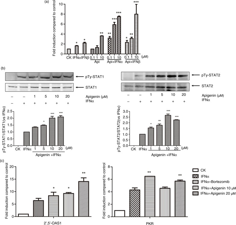Apigenin enhances IFN-α/β-induced JAK/STAT activation. (a) HepG2-ISRE-Luc2 cells were seeded in 96-well plates (1×10 4 /well) and treated with the various concentrations of apigenin for 2 h, then with 200 U/mL IFN-α or IFN-β for 24 h. (b) HEK293A cells were incubated with indicated concentrations of apigenin for 2 h, then with 2000 U/mL IFN-α for another 1 h. The cell lysates were immunoblotted with phospho-STAT1 (Tyr701), STAT1, <t>phospho-STAT2</t> (Tyr690), or STAT2 antibodies. The quantitative results are shown. (c) HEK293A cells were treated 200 U/mL IFN-α with or without 10 µM bortezomib or the indicated concentrations of apigenin for 24 h. Real-time quantitative reverse transcription-PCR was used to determine the mRNA expression of PKR or 2',5'-OAS1. The result is presented as induction (n-fold) relative to basal levels in untreated cells. GAPDH was used as an internal control. (*) p