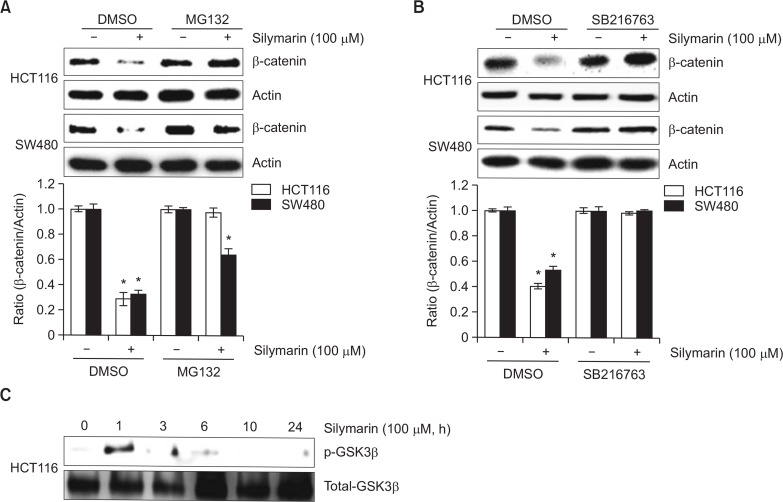 GSK3β-mediated proteasomal degradation of β-catenin by silymarin treatment. (A, B) HCT116 and SW480 cells were pretreated with 10 μM of MG132 or 20 μM of SB216763 for 2 h and then co-treated with 100 μM of silymarin for 6 h. Cell lysates were subjected to SDS-PAGE and then the Western blot was performed for β-catenin and actin. (C) HCT116 cells were treated with 100 μM of silymarin for the indicated times. Cell lysates were subjected to SDS-PAGE and then the Western blot was performed for phospho-GSK3β and total-GSK3β. * p