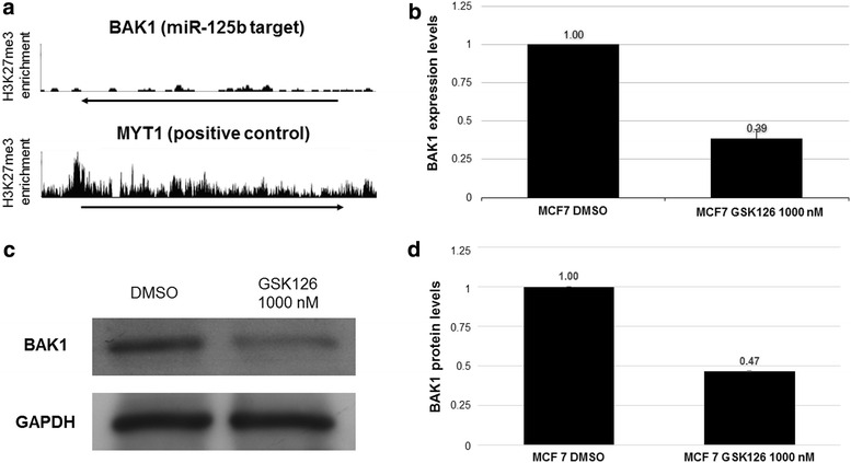 Elevated levels of miR-125b-1 affect the expression levels of BAK1. The target BAK1 was selected based on an evaluation of H3K27me3 enrichment in MCF7 cells by ENCODE ( a ). Next, we evaluated BAK1 expression levels by qRT-PCR ( b ). Finally, we determined protein levels by Western blotting ( c , d ). n = 3 *p > 0.05