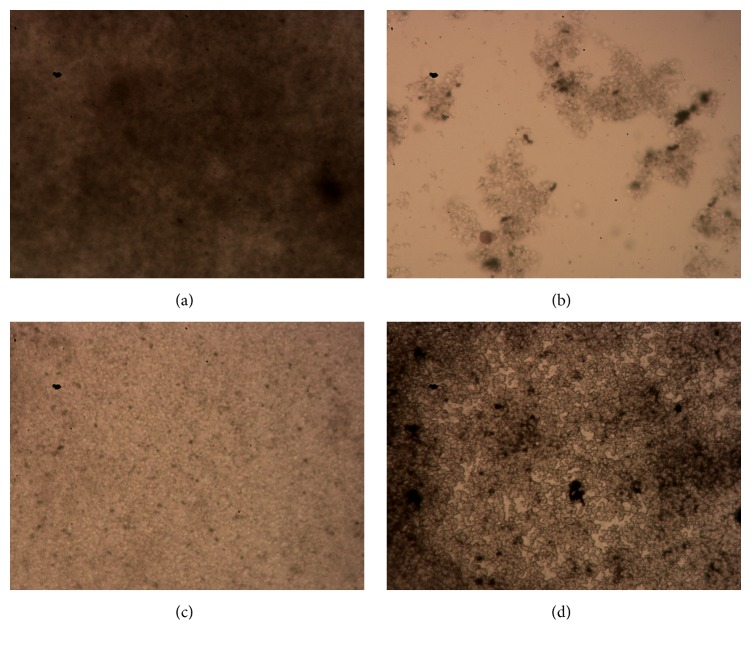 Representative images of biofilms of S. epidermidis isolate 30 treated with different agents. The morphological structures of BFs of S. epidermidis isolate 30 treated with TSB control (a), 10 mg/mL of TASA (b), 500 mg/L of CIP (c), and 500 mg/L of ERY for 24 hours were examined by a fast silver staining method.