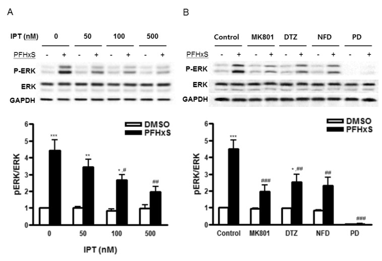 Effects of imperatorin on PFHxS-induced ERK activation. Cells were treated with 300 µM PFHxS or DMSO as a vehicle control for 30 min in the presence or absence of (A) imperatorin (50, 100, 500 nM), (B) MK801 (1 µM), DTZ (10 µM), NFD (10 µM) or PD (50 µM). The levels of phosphorylatedand total protein of ERK1/2 were detected by Western blot analysis. The blots were reprobed with GAPDH. The blots represent three independent experiments. The densities of bands were measured and the fold increase in ratio pERK/ERK was presented as mean±SEM of three independent experiments. * p