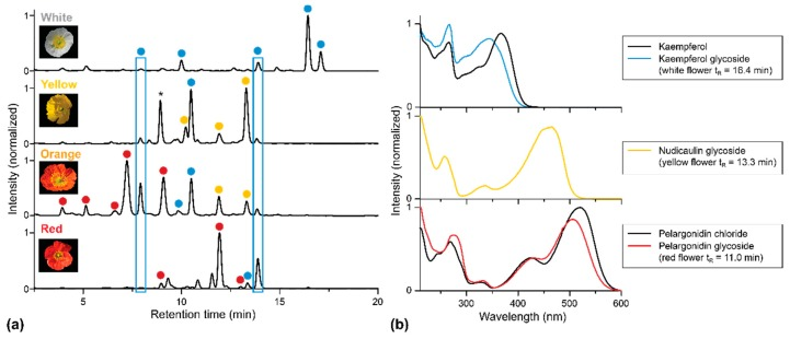 HPLC-PDA analysis of extracts of apical petal parts of four P. nudicaule cultivars. ( a ) Chromatograms recorded at 254 nm. Peaks representing the same aglycone (previously identified by LC-MS and NMR [ 7 , 10 , 15 ] and here classified by the corresponding UV/Vis absorption spectra) are marked with the same color: ● Kaempferol glycoside, ● nudicaulin, ● pelargonidin glycoside. The peak marked with an asterisk (yellow flower, t R = 8 min) shows no flavonoid absorption spectrum and may be a degradation product. ( b ) UV/Vis absorption spectra of representative glycosides and authentic aglycones of kaempferol and pelargonidin. Deviations between UV/Vis absorption spectra of the references (kaempferol, pelargonidin chloride), and the glycosides are an effect of the substitution. Nudicaulin aglycone is not available due to instability. The obtained nudicaulin UV/Vis absorption spectrum matches the one reported by Tatsis et al. [ 15 ].