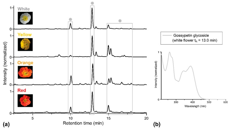 HPLC-PDA analysis of extracts of basal petal parts of four P. nudicaule cultivars. ( a ) Chromatograms recorded at 351 nm. Gossypetin glycosides (identified by UV/Vis absorption spectra) are marked with dots ● . ( b ) UV/Vis absorption spectrum of one representative gossypetin glycoside. The spectrum matches the one reported by Suzuki et al. [ 16 ].