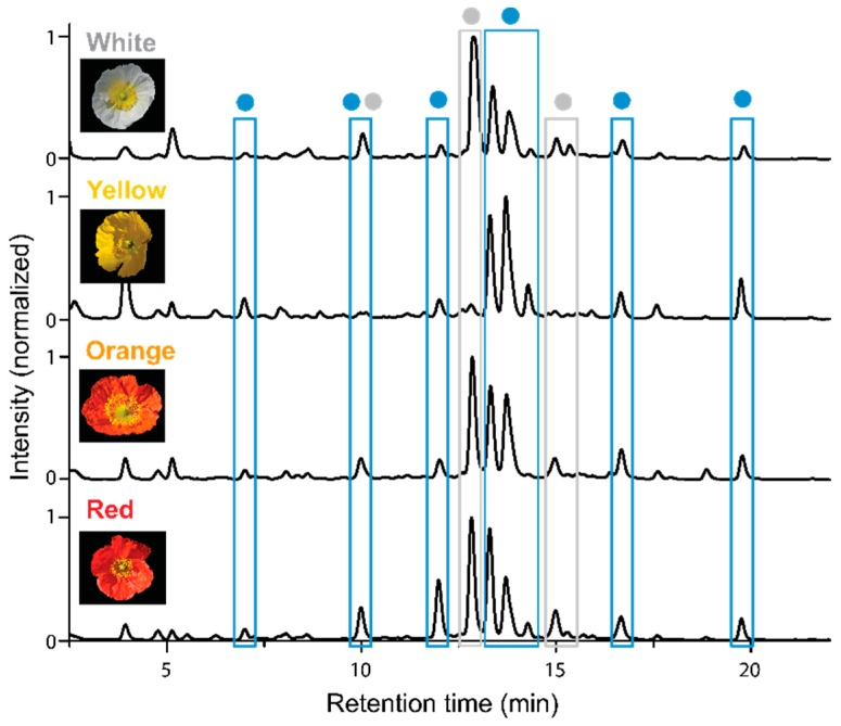 HPLC-PDA chromatograms of stamen extracts of four P. nudicaule cultivars recorded at 254 nm. Peaks with the same aglycone (identified by UV/Vis absorption spectra) are marked with the same color: ● Kaempferol glycoside, ● gossypetin glycoside.