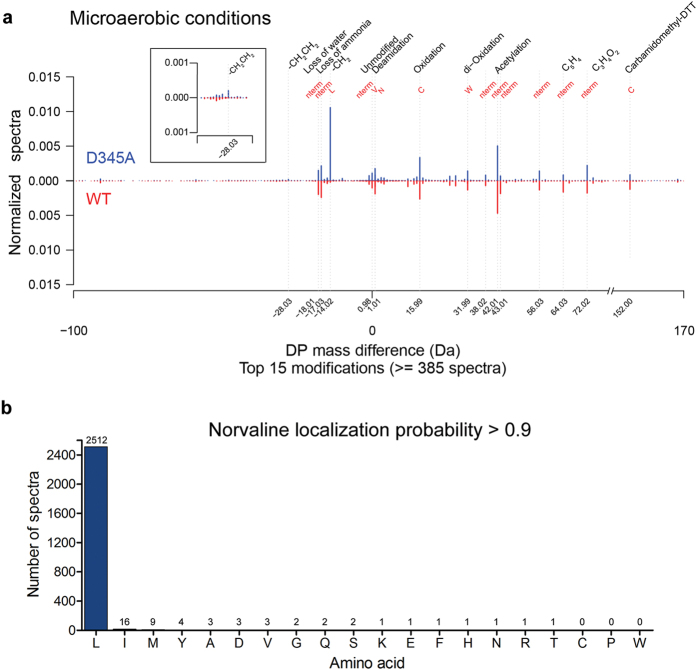 Unbiased protein modification analysis of LC-MS/MS measurements of the WT- and D345A-LeuRS MG1655 strains under microaerobic condition. ( a ) The graph depicts the frequencies of mass-differences (with respect to the unmodified peptide versions) normalized by the total number of spectra (in D345A-LeuRS 462764 and in WT 459446 spectra). The predicted modifications that correspond to the mass differences together with the modified residues are written on top of the graph. The inset shows a 5-fold enlargement of the graph area encompassing the mass difference −28.03 (corresponds to leucine substitution with α‐aminobutyrate). ( b ) Barchart illustrating the localization frequencies of norvaline sites to amino acid residues obtained with the D345A-LeuRS MG1655 strain grown in microaerobic conditions. Sites with localization probability of ≥0.9 are shown.