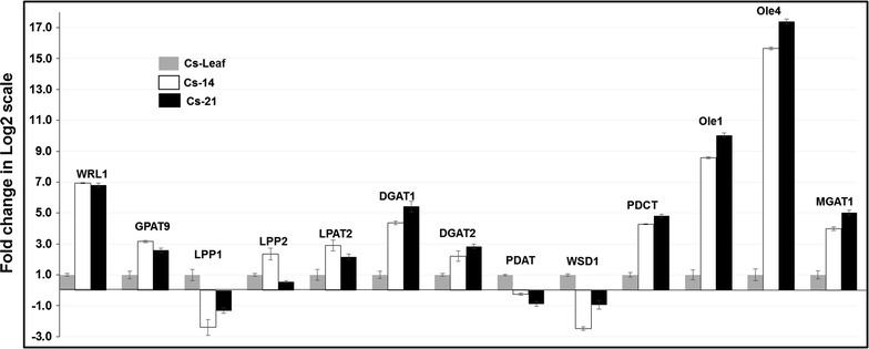 Expression of TAG biosynthesis-associated genes in Camelina developing seeds and leaf measured by qRT-PCR. Relative combined expression of all three copies of CsWRl1, CsGPAT9, CsLPP1, CsLPP2, CsLPAT2, CsDGAT1, CsDGAT2, CsPDAT, CsWSD1, CsPDCT, CsOle1, CsOle4, and CsMGAT1. The descriptive gene names are available in supplemental tables. The bars represent the fold change in log2 scale as measured by real-time qPCR from cDNA derived from Camelina seeds at 10–15 (Cs-14) and 16–21 (Cs-21) days after flowering (DAF) and from leaf tissue (Cs-Leaf). The leaf sample was used as the calibrator for the remaining samples. Error bars represent the standard error ± SE of three biological replicates. The quantification of the genes is measured relative to the expression of the indigenous housekeeping gene β-actin