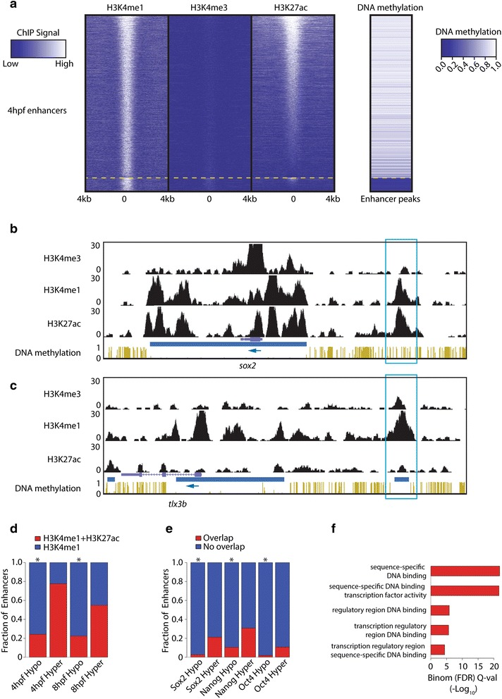 Identification of hypo-enhancers. a Heat map displaying H3K27Ac and DNA methylation at enhancers, called by being <t>H3K4me1-positive</t> and H3K4me3-negative at 4 hpf. The heat map was first sorted on DNA methylation, split ( yellow dashed line ), and independently sorted on H3K27ac. b Genome browser view of a hyper-enhancer close to the TSS of sox2 . ChIP-Seq data and DNA methylation data are displayed for embryos 4 hpf. Normalized ChIP-Seq enrichments and fractional methylation are indicated at the left side of the image. The blue box indicates the hyper-enhancer. The blue arrow indicates the orientation of the gene. Blue horizontal bars indicate HMRs. c Genome browser view of a hypo-enhancer close to the TSS of tlx3b . ChIP-Seq data and DNA methylation data are displayed for embryos 4 hpf. Normalized ChIP-Seq enrichments and fractional methylation are indicated at the left side of the image. The blue box indicates the hypo-enhancer. The blue arrow indicates the orientation of the gene. Blue horizontal bars indicate HMRs. d The overlap of the hypo- and hyper-enhancers with H3K27ac at the indicated developmental time points (* p