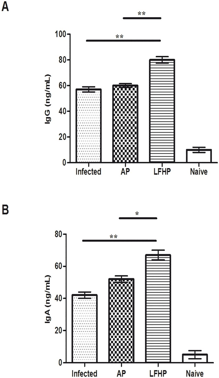 Humoral response in H . pylori infected mice. Levels of <t>IgG</t> A) in serum and IgA B) in stomach homogenate in: (Infected) mice infected with <t>Helicobacter</t> pylori (10 6 CFU/mouse); (AP) infected with Helicobacter pylori (10 6 CFU/mouse) and treated with antibiotic pool (amoxicillin 300μg/mouse plus clarithromycin 300 μg/mouse); (LFHP) infected with Helicobacter pylori (10 6 CFU/mouse) and treated with lactoferrin adsorbed on nanoparticles of hydroxyapatite plus CFS Lactobacillus paracasei (300 μg/mouse plus 50μl /mouse); (Naïve) mice neither infected with Helicobacter pylori or treated. The levels were determined by ELISA test and are presented as mean value ± S.D and are representative of three independent experiments, each performed in triplicate. *p value