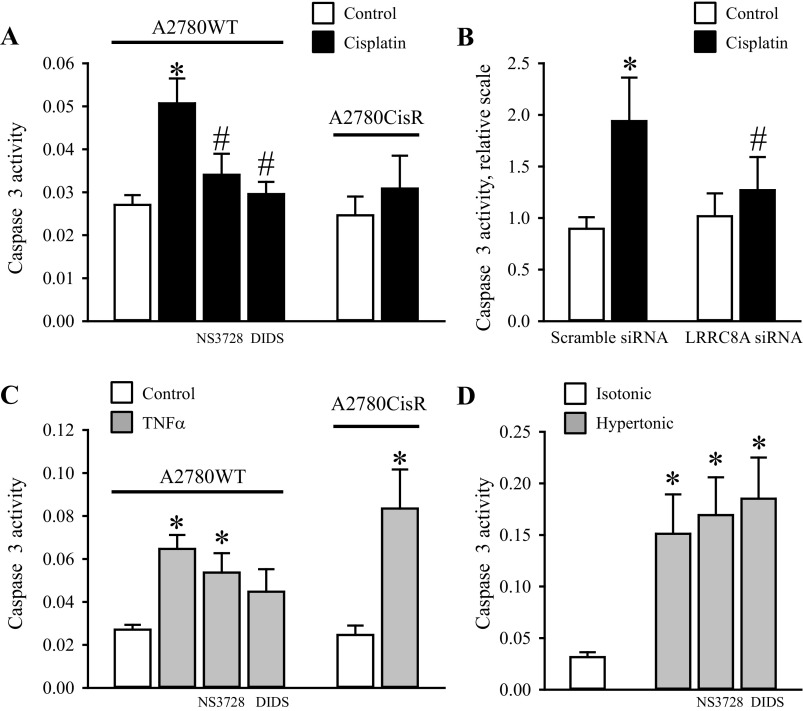 Cotreatment with anion-channel blockers and transient knock-down of LRRC8A abolish Cisplatin-induced but not TNFα and Hyperosmotic-induced Caspase-3 activation in wild-type A2780 cells. A2780WT and A2780CisR cell lysates were used for Caspase-3 activity assay using a commercial kit (see experimental procedures ). A : A2780CisR cells were exposed to 10 μM Cisplatin for 18 h and A2780WT cells were likewise treated with Cisplatin in the absence or presence of 100 μM NS3728 or 400 μM DIDS. Data represent 6–8 (A2780WT) and 4 (A2780CisR) individual sets of experiments ± SE. * and #: Significantly increased by Cisplatin compared with the respective control and significantly reduced compared with Cisplatin treatment in the absence of the inhibitor, respectively (ANOVA, Fisher LSD method). B : A2780WT were treated with either 25 nM scramble siRNA or LRRC8A siRNA for 30 h and subsequently exposed to 10 μM Cisplatin for another 18 h. Data represent 4 individual experiments ± SE. * and #: Significantly increased by Cisplatin compared with the respective control and significantly reduced compared with Cisplatin treatment in Scramble siRNA-treated cells (Student's t -test). C: A2780CisR cells were exposed to 20 nM TNFα for 18 h. A2780WT cells were likewise treated with TNFα in the absence or presence of 100 μM NS3728 or 400 μM DIDS. Data represent 6–8 (WT) and 4 (CisR) individual experiments ± SE. *Significantly increased compared with the respective control (ANOVA, Fisher LSD method). D : A2780WT cells were exposed to isotonic or hypertonic NaCl for 4.5 h in the absence or presence of 100 μM NS3728 or 400 μM DIDS. Data represent 3 individual experiments ± SE. *Significantly increased compared with isotonic control (ANOVA, Fisher LSD method).