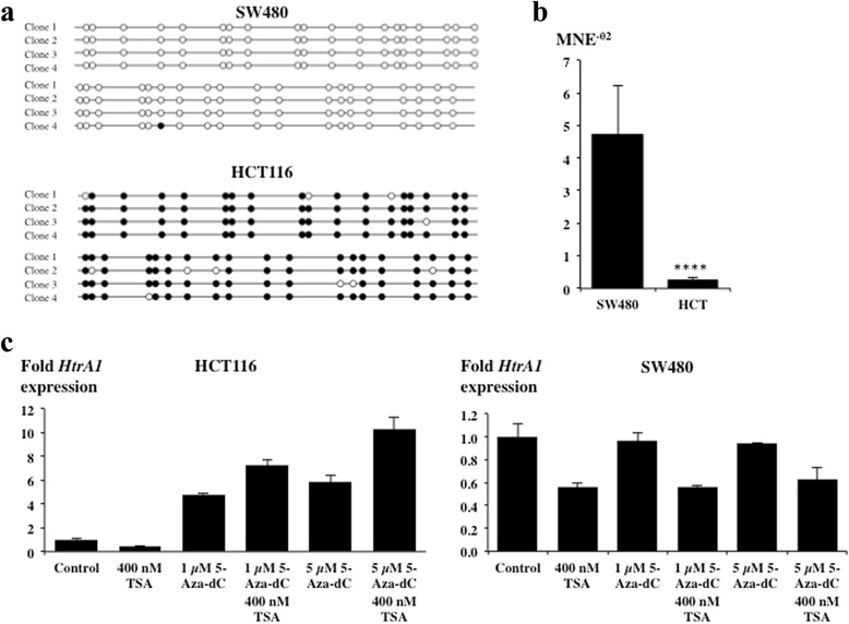 Epigenetic regulation of HTRA1 expression in HCT116 cells. a Methylation of the human HTRA1 promoter (−388 bp to −115 bp) was determined by sequencing 4 independent clones of bisulfite treated DNA of HCT116 and SW480 cells. b Mean normalized expression (MNE) of HTRA1 in SW480 and HCT116 cells determined by qRT-PCR (n = 3 independent cell lines, each done in triplicates, two-tailed Mann–Whitney U test, p-value