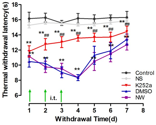 K252a reduced nicotine withdrawal-induced hyperalgesia in rats. The thermal withdrawal latency (TWL) was measured from 1 to 7 days after the last injection in rats in the control, NS, NW, NW+DMSO, and NW+K252a groups (*P