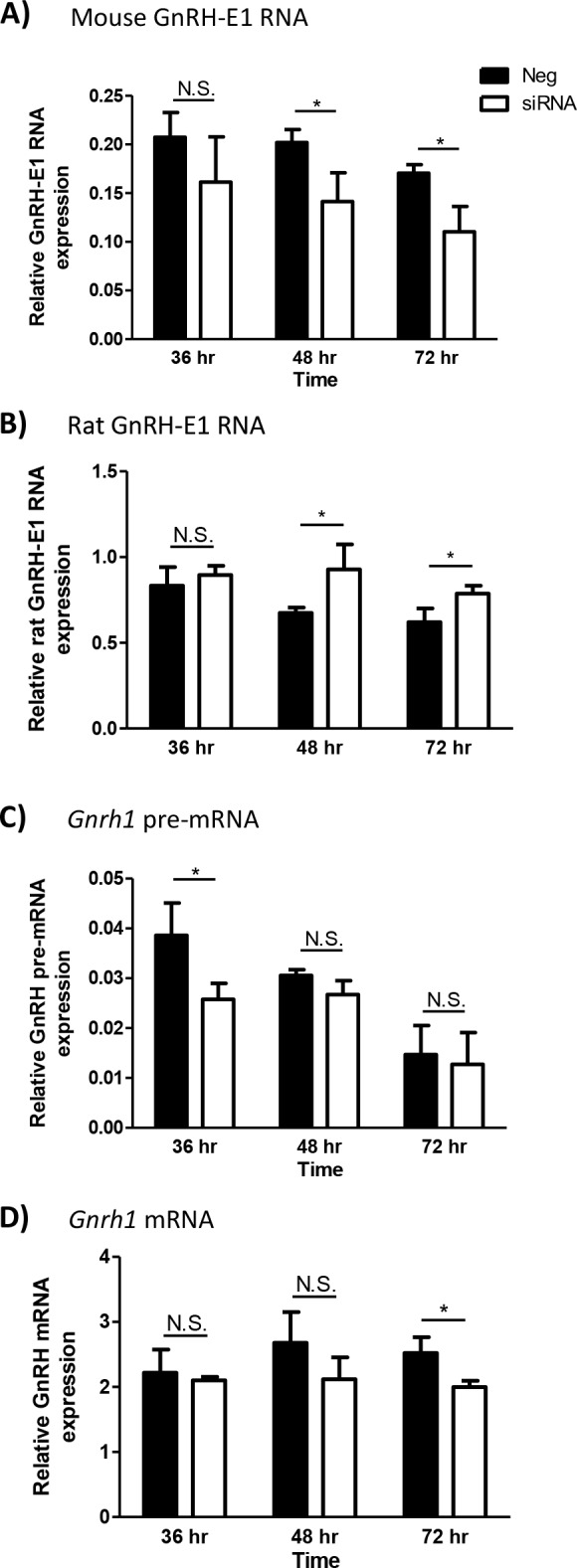 The effect of <t>GnRH-E1</t> RNA knockdown on Gnrh1 gene expression. (A-D) GT1-7 neurons were transfected with either negative <t>siRNA</t> control (Neg; black bars) or siRNA targeting both strands of the mouse GnRH-E1 RNA (siRNA; white bars). Total RNA was harvested at 36 hours, 48 hours, and 72 hours after siRNA transfection. RT-qPCR analysis was performed to quantify endogenous mouse GnRH-E1 RNA (A), transgene-derived rat (rTg) GnRH-E1 RNA (B), Gnrh1 pre-mRNA (C), and Gnrh1 mRNA (D) expression. Relative RNA expression is normalized to control histone 2A.Z ( H2afz ) mRNA expression at each time point. Data are displayed as the mean ± SD, where statistical significance was determined by Student's t-test compared between negative control and siRNA treatment at each time point. Asterisk indicates statistical significance, where p
