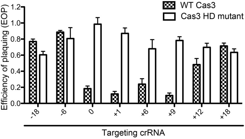 Cascade-mediated interference activity with extended and shortened crRNAs. Shown is the efficiency of plaquing of Type I-Fv CRISPR-Cas system variants expressed in E. coli . The 32 nt spacer sequence (0) was modulated by removal or addition of the indicated number of nucleotides (−18 to +18) while maintaining complementarity to the lambda phage sequence. These arrays were co-expressed in E. coli BL21-AI with pCas6 (in checkers) or pCas7 (Cas3 HD mutant, white bars), which was then subjected to plaque assays with lambda phage. Bars represent mean ± SEM of three independent experiments.