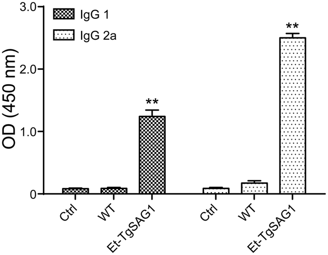 Th 1- and/or Th 2- type immune responses induced by Et-TgSAG1 sporozoites in intraperitoneally immunized mice. The levels of <t>IgG</t> 1 and <t>IgG</t> 2a antibodies to TgSAG1 2 weeks after the boost immunization were analysed via ELISA with recombinant TgSAG1 (n = 10).