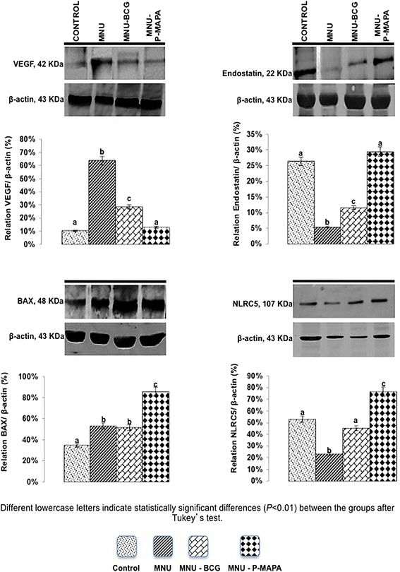 Representative Western Blotting and semiquantitative determination for VEGF, Endostatin, BAX and NLRC5 protein levels. Samples of urinary bladder were pooled from five animals per group for each repetition (duplicate) and used for semi-quantitative densitometry (IOD – Integrated Optical Density) analysis of the VEGF, Endostatin, BAX and NLRC5 levels following normalization to the β-actin. All data were expressed as the mean ± standard deviation. Different lowercase letters ( a, b, c, d ) indicate significant differences ( p