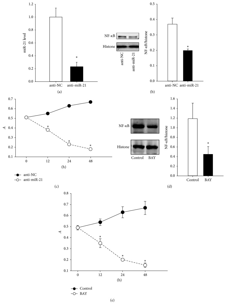 The effects of downregulated miR-21 on nucleoprotein NF- κ B level and cell viability. (a) The miR-21 levels in RA FLS after anti-miR-21 treatment. (b) The determination of nucleoprotein NF- κ B levels using western blotting methods. (c) The change in the RA FLS proliferation rate after anti-miR-21 treatment. (d) The nucleoprotein NF- κ B level after BAY 11-7082 treatment in RA FLS. (e) The change in the FLS proliferation rate after BAY 11-7082 treatment in RA FLS. ∗ P