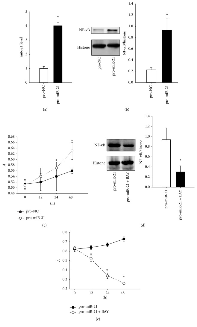 The effects of overexpressed miR-21 on nucleoprotein NF- κ B level and cell viability. (a) The miR-21 levels in normal FLS after pro-miR-21 treatment. (b) The determination of nucleoprotein NF- κ B levels using western blot methods. (c) The change of normal FLS proliferation rate after pro-miR-21 treatment. (d) the nucleoprotein NF- κ B level detection after additional BAY 11-7082 treatment in normal FLS. (e) The change in FLS proliferation rate after the additional BAY 11-7082 treatment in normal FLS. ∗ P