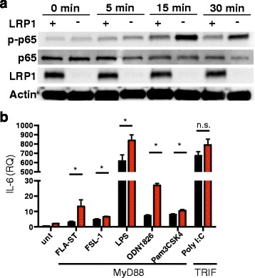 LRP1 is an inhibitor of NF-kB through the MyD88 pathway. a Macrophages isolated from Cx3cr1 cre - Lrp1 fl/fl (LRP1-) and Lrp1 fl/fl (LRP1+) mice were treated with LPS (1 μg/ml) and the expression of p-p65, p65, LRP1 and actin were determined by immunoblot. Representative of 3 independent experiments). b LRP1+ and LRP1- macrophages were treated with TLR ligands and expression of IL-6 was determined by qPCR analysis. * p