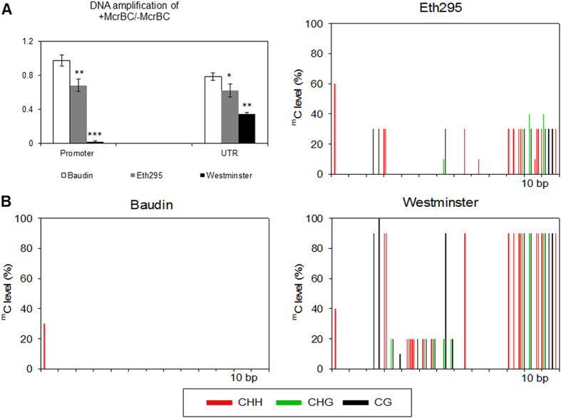 DNA methylation status of Mlo in landrace Eth295, cv. Baudin and cv. Westminster. ( A ) DNA methylation status was determined by digestion with McrBC followed by quantitative PCR at the promoter and UTR region of Mlo gene. Undigested genomic DNA was used as a control. Four biological replicates were used for each accession and real time PCR was performed with two McrBC digest replicates and four qPCR technical replicates. Error bars are standard errors and significant differences are determined using the Student's t-test; *** P