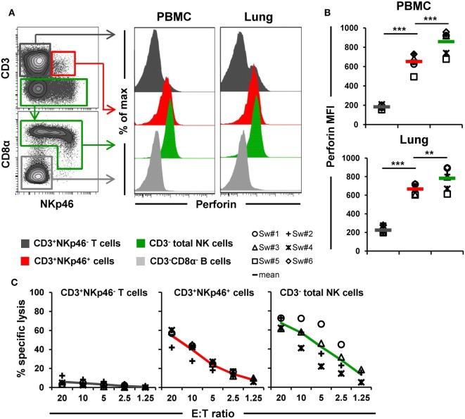 Cytolytic properties of CD3 + NKp46 + lymphocytes . (A) Lymphocytes derived from blood and lung were analyzed for perforin expression. Histograms show the perforin expression levels of CD3 + NKp46 + cells (red) compared with CD3 + NKp46 − T cells (gray) and total CD3 − NK cells (green) for one representative animal. Results for CD3 − CD8α − cells, mainly consisting of B cells, are shown in light gray and serve as negative reference. (B) Median fluorescence intensities of perforin within respective lymphocyte subsets are shown for PBMC and lung for six animals. Mean values are represented by colored bars. Significant differences between the CD3 + NKp46 + cells and T as well as NK cells are indicated (** p ≤ 0.01, *** p ≤ 0.001). (C) FACS-sorted CD3 + NKp46 − T cells (gray), CD3 + NKp46 + cells (red), and total CD3 − NK cells (green) from blood were stimulated with rpIL-2 and rpIL-15 for 36 h and subsequently used in a 4h-cytotoxic assay with K562 as target cell line. Respective lymphocyte subsets were tested at five different E:T ratios: 20:1, 10:1, 5:1, 2.5:1, and 1.25:1. Results obtained from analyses of four animals are shown. Colored lines represent mean values of the respective lymphocyte subsets.