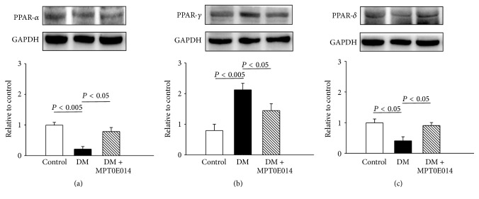 Cardiac peroxisome proliferator-activated receptor (PPAR) proteins in control, diabetes mellitus (DM), and MPT0E014-treated DM (DM + MPT0E014) rats. Cardiac PPAR- α and PPAR- δ protein expressions significantly decreased in DM ( n = 4) compared to control ( n = 4) and DM + MPT0E014 ( n = 4) rats. Cardiac PPAR- γ protein expressions were enhanced in DM ( n = 4) compared to control ( n = 4) and DM + MPT0E014 ( n = 4) rats. Representative immunoblots and average data of (a) PPAR- α , (b) PPAR- γ , and (c) PPAR- δ in different groups. Densitometry was normalized to glyceraldehyde 3-phosphate dehydrogenase (GAPDH) as an internal control.
