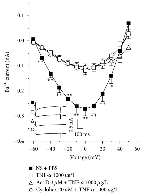 The Ba 2+ current reduction induced by TNF- α is not mediated by a synthetic pathway activation in guinea pig tracheal myocytes. Ba 2+ current evoked by step depolarization from −60 to 50 mV in tracheal cells from nonsensitized guinea pigs added with fetal bovine serum (NS + FBS, n = 7) were significantly diminished when myocytes were grown with TNF- α ( n = 7). Neither <t>actinomycin</t> D (Act D, n = 6) nor cycloheximide (Cyclohex, n = 9) addition during myocyte growth altered TNF- α induced effect on the Ba 2+ current. Inset represents original recordings. ∗ p