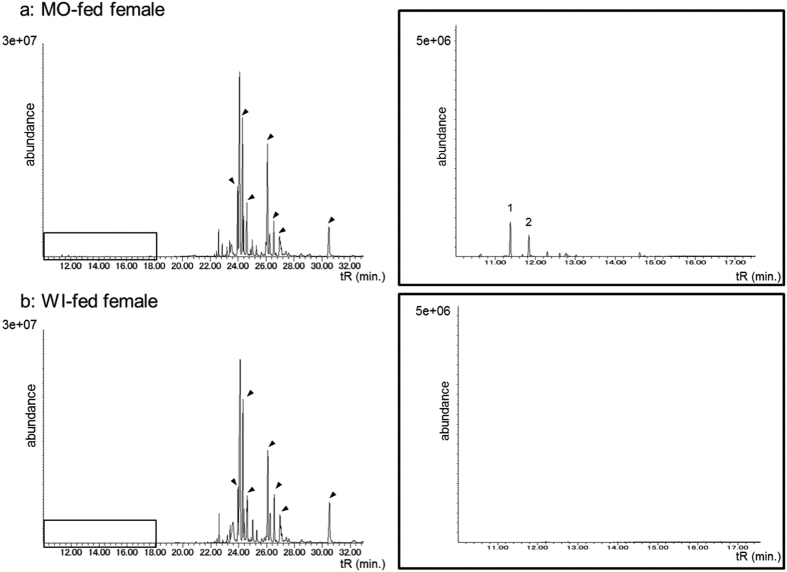 Total ion chromatogram of the  n -hexane fractions separated from MO- ( a ) and WI-fed female ( b ) extracts. Enlarged chromatograms for each female are shown on the right. The peaks indicated with arrows were previously identified as contact sex pheromones 12 . Peaks 1 and 2 represent  β -elemene and  β -caryophyllene, respectively.