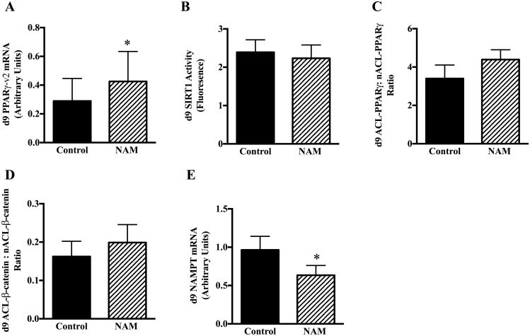 Effects of NAM (3mM) incubation during adipocyte cell differentiation in human MSC. Cells were harvested at day 9 of differentiation and mRNA expression of PPARγ (A), SIRT1 enzyme activity (B), and acetylation of SIRT1 protein targets, PPARγ (C) and β-catenin (D), and mRNA expression of NAMPT (E) in the vehicle-control and NAM only conditions as described in Methods. N = 9 per group. *p