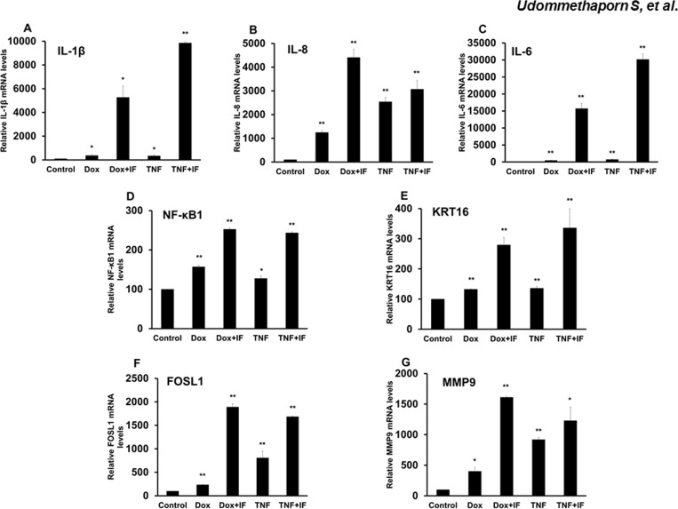 Effects of doxycycline induces pro-inflamatory cytokines (IL-1β, IL-8, IL-6, NF-κB1, KRT16, FOSL1 and MMP9) expression in HaCaT-TNF-α cells. HaCaT-TNF-α cells treated with 1.0 μ g/mL Dox or 10 ng/mL TNF-α for 24 hrs were then treated with or without 10 ng/mL IFN-γ for a further 24 hrs. Total RNA was extracted and reverse-transcribed. cDNA was amplified by qRT-PCR using IL-1β, IL-8, IL-6, NF-κB1, KRT16, FOSL1 and MMP9 primers ( Table 1 ). GAPDH was used as loading control. Relative expression of IL-1β (A) IL-8 (B) IL-6 (C) NF-κB1 (D) KRT16 (E) FOSL1 (F) and MMP9 expression (G) are shown. Values represent relative gene expression normalized with GAPDH. Mean ± SEM from three independent experiments. *( p