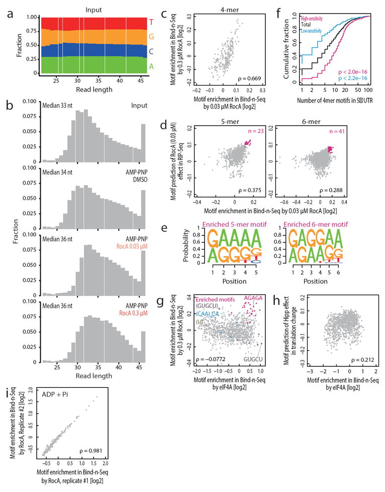 Motif enrichment by Bind-n-Seq (a) Nucleotide composition in each length of reads in input RNAs for Bind-n-Seq. Input RNAs are random in entire read length. (b) Length distribution of reads from Bind-n-Seq. RNAs bound to eIF4A showed longer length distribution, indicating that eIF4A has preference for longer RNAs. (c) Correlations of 4-mer motif enrichment in Bind-n-Seq by 0.03 μM RocA treatment to that by 0.3 μM RocA treatment. (d) Correlations between 5-mer and 6-mer motif enrichment in Bind-n-Seq by 0.03 μM RocA treatment and motif prediction of 0.03 μM RocA effect in RIP-Seq. ρ: Spearman's rank correlation. (e) Highest-scoring 5-mer and 6-mer motifs in Bind-n-Seq and RIP-Seq. (f) Cumulative fractions along number of 4-mer motifs ( Figure 2b ) in 5′ UTR are plotted to total, RocA high-sensitivity, and RocA low-sensitivity mRNAs. Significance is calculated by Mann-Whitney U test. (g) Correlations of Bind-n-Seq motif enrichment (5-mer) by eIF4A to that by 0.03 μM RocA treatment. The motifs appeared in RNAs used in Extended Data figure 8 are highlighted. (h) Correlation of Bind-n-Seq motif enrichment (5-mer) by eIF4A to motif prediction of Hipp effect in translation change, which is define as Spearman's correlation of motif number in 5′ UTR to translation -fold change by Hipp. mRNAs with high affinity motif to eIF4A in 5′ UTR are resistant to Hipp treatment. (i) The correlation between enriched motifs of replicates in Bind-n-Seq with ADP + Pi. ρ: Spearman's rank correlation.