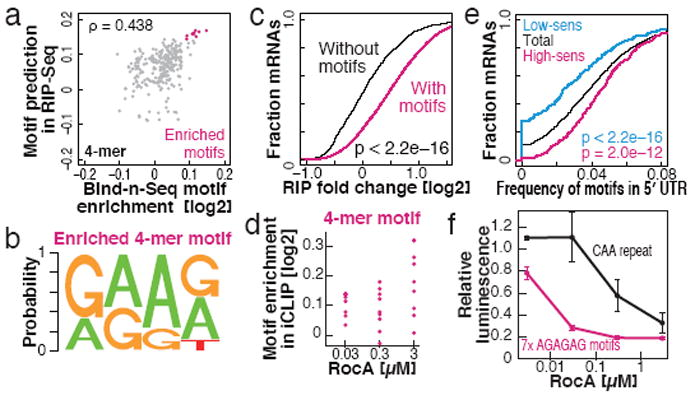 RNA Bind-n-Seq and iCLIP reveal that RocA preferentially increases the affinity between eIF4A and polypurine motif (a) Correlations between 4-mer motif enrichment in Bind-n-Seq by 0.03 µM RocA treatment and motif prediction of 0.03 µM RocA effect in RIP-Seq. ρ: Spearman's rank correlation. (b) Highest-scoring elements in Bind-n-Seq and RIP-Seq. (c) The change in mRNA binding for mRNAs with or without the enriched 4-mer motif (b) in their 5′ UTRs is shown as the RIP -fold change by RocA normalized to spike-in RNA. Significance is calculated by Mann-Whitney U test. (d) Enrichment of 4-mer motifs (b) in iCLIP by RocA treatment relative to control DMSO treatment. (e) The frequency of the 4-mer motif (b) in the 5′ UTR predicts whether a mRNA is high- or low-sensitivity, based on the difference in cumulative distributions of motifs in the 5′ UTR. Significance is calculated by Mann-Whitney U test. (f) Reporter assay in HEK 293 cells with a CAA-repeat 5′ UTR containing seven polypurine motif (AGAGAG) insertions ( Extended Data Figure 9a ). Data represent mean and S.D. (n = 3).