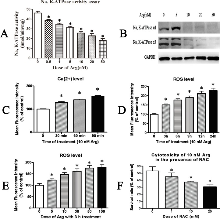 Effect of arenobufagin (Arg) on Na, <t>K-ATPase</t> activity, intracellular Ca(2+) level and ROS level. ( A ) Quantitation of Na, K-ATPase activity in HeLa cells treated with arenobufagin(Arg) at different doses for 24h. (B) Western blotting results of Na, K-ATPase α1 and <t>α3</t> in HeLa cells treated with arenobufagin(Arg) at different doses for 24 h. ( C ) Quantitation of the intracellular Ca(2+) level in HeLa cells treated with 10 nM arenobufagin for different time periods. ( D ) Quantitation of the intracellular ROS level in HeLa cells treated with 10 nM arenobufagin for different time periods. ( E ) Quantitation of the intracellular ROS level in HeLa cells treated with arenobufagin at different doses for 3h. (F) The viability of HeLa cells treated with 10 nM arenobufagin for 72 h in the presence of ROS scavenger NAC (N-acetyl cysteine). Data were statistical results of three independent experiments. Data were expressed as mean ± SD. *Significant difference from the control group at P