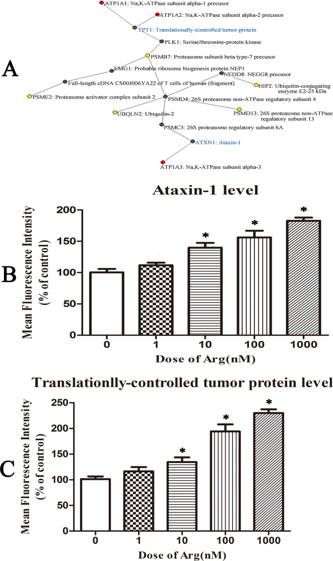 Ataxin-1 and translationally-controlled tumor protein might be intermediate proteins between Na, K-ATPase and proteasome. ( A ) Protein-protein interaction network constructed to connect α1, α2 or α3 subunits of Na,K-ATPase and proteasomal-related proteins found in the proteomic study. The red dots were α1, α2 or α3 subunits of Na,K-ATPase and the yellow dots were 5 proteasomal-related proteins found in the proteomic study. The intermediate partner proteins except ataxin-1 and translationally-controlled tumor protein were shown in black. Ataxin-1 and translationally-controlled tumor protein (shown in blue) were considered as the most important intermediate partners between Na,K-ATPase and proteasome. ( B ) The protein expression level of ataxin-1 in control HeLa cells or cells treated with arenobufagin at different doses for 24 h. ( C ) The protein expression level of translationally-controlled tumor protein in control HeLa cells or cells treated with arenobufagin at different doses for 24 h. Data were statistical results of three independent experiments. Data were expressed as mean ± SD. *Significant difference from the control group at P