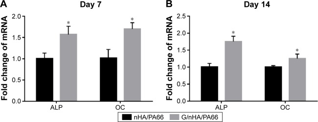 qRT-PCR analysis of the mRNA level of ALP and OC in C3H10T1/2 cells cultured for 7 ( A ) and 14 ( B ) days. Note: * P