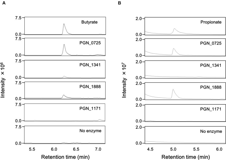 GC-MS chromatograms of butyrate and propionate in reaction mixtures . Total ion chromatogram of butyrate (A) and propionate (B) is shown. The mass spectra of each sample agree well with those of the corresponding standard. The reaction mixtures, containing 200 mM sodium acetate and either 1 mM butyryl-CoA or 1 mM propionyl-CoA, with recombinant PGN_0725, PGN_1341, PGN_1888, or PGN_1171 proteins, were incubated for 1 h. After the proteins were removed by acetone precipitation treatment, aqueous phase aliquot (1 μl) was analyzed.
