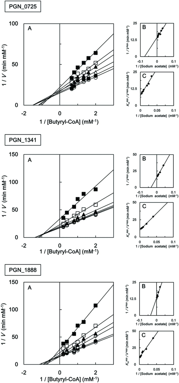 Steady-state kinetic analysis of butyryl-CoA:acetate CoA transferase activities of recombinant PGN_0725, PGN_1341, and PGN_1888 proteins . (A) Double reciprocal plots of the initial velocities of acetyl-CoA and butyrate formation from butyryl-CoA and sodium acetate catalyzed by purified recombinant enzymes. Different butyryl-CoA concentrations (0.5–5 mM) were assayed at fixed sodium acetate concentrations (25 mM, filled squares; 50 mM, open squares; 100 mM, filled triangles; 125 mM, open triangles; 200 mM, filled circles; or 250 mM, open circles). (B) Secondary plots of y intercepts (velocity reciprocals) vs. sodium acetate concentrations. (C) Secondary plots of the reciprocal slopes from panel (A) vs. sodium acetate concentration. Data represent the mean ± standard deviation ( n = 3).