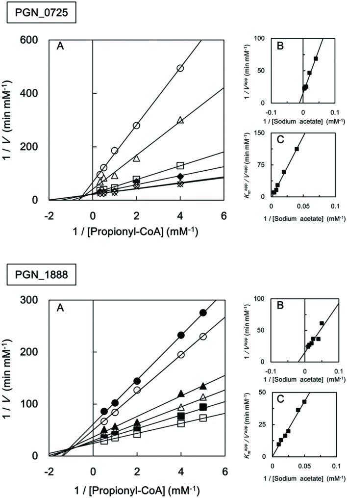 Steady-state kinetic analysis of propionyl-CoA:acetate CoA transferase activities of recombinant PGN_0725 and PGN_1888 proteins . (A) Double reciprocal plots of the initial velocities of acetyl-CoA and propionate formation from propionyl-CoA and sodium acetate catalyzed by purified recombinant enzymes. Different concentrations of propionyl-CoA (0.2–3 mM) were assayed at fixed sodium acetate concentrations (20 mM, filled circles; 25 mM, open circles; 40 mM, filled triangles; 50 mM, open triangles; 75 mM, filled squares; 100 mM, open squares; 125 mM, filled diamonds; 200 mM, open diamonds; and 250 mM, crosses). (B) Secondary plots of y intercepts (velocity reciprocals) vs. sodium acetate concentrations. (C) Secondary plots of the reciprocal slopes from panel (A) vs. sodium acetate concentrations. Data represent the mean ± standard deviation ( n = 3).
