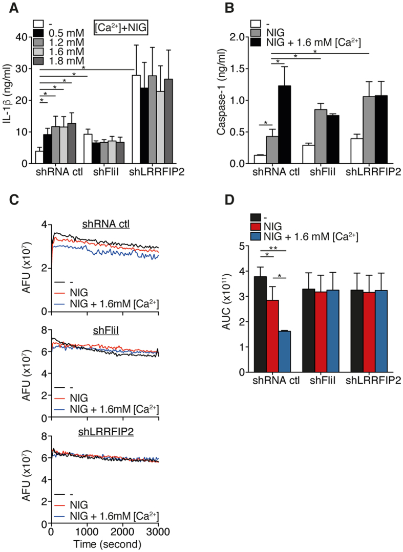Ca 2+ increase the NLRP3 inflammasome activation by enhancing the severing of F-actin by FliI. ( A ) IL-1β production in culture supernatants of primed THP-1 cells pretreated with increasing doses of CaCl 2 (Ca 2+ ) and stimulated with nigericin. Data are means ± SEM of at least 3 independent. ( B ) Caspase-1 in supernatants (SN) of THP-1 cells pretreated with 1.6 mM CaCl 2 and activated by nigericin as indicated and assessed by ELISA. Data are means ± SEM of at least 3 independent. ( C ) Actin depolymerization was performed with 0.2 μg/ml of pyrene-labeled F-actin containing nigericin-activated THP-1 cells lysate. Representative pictures of 3 independent experiments. ( D ) Area under the curve (AUC) represented in ( C ) was calculated using GraphPad Prism version 6. Data are represented as mean ± SEM of at least 3 independent experiments. Statistical significance was determined by Mann-Whitney U analysis. See Figure S4 .