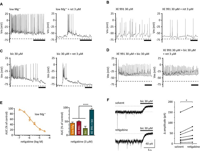 Effects of retigabine on seizure‐like activity and tonic currents in cultured hippocampal neurons. Seizure‐like activity was induced by low extracellular Mg 2+ (Mg 2+ ‐free solution), XE 991, or bicuculline (bic) applied either alone or together. ( A – D ) Original recordings of seizure‐like activity induced by low Mg 2+ ( A ), 30 μ m XE 991 ( B ), 30 μ m bicuculline (bic; C ), or XE 991 plus bicuculline ( D ). Traces were obtained before (left) and during (right) the presence of 3 μ m retigabine (ret). Scale bars: 1 s. Dashed lines refer to the average membrane potential prior to the induction of seizure‐like activity. ( E ) Concentration–response curve for the inhibition of seizure‐like activity induced by low Mg 2+ (orange) in the presence of the indicated concentrations of retigabine. This inhibition was evaluated by the reduction of the area under the curve ( AUC ), which was half maximal at 1.3 ± 0.3 μ m (n = 7). The inhibitory effect of 3 μ m retigabine was also quantified for seizure‐like activity induced by XE 991 (red), bicuculline (bic; green), or XE 991 plus bicuculline (green‐blue). AUC values obtained with XE 991 plus bicuculline were significantly different from all other values at p
