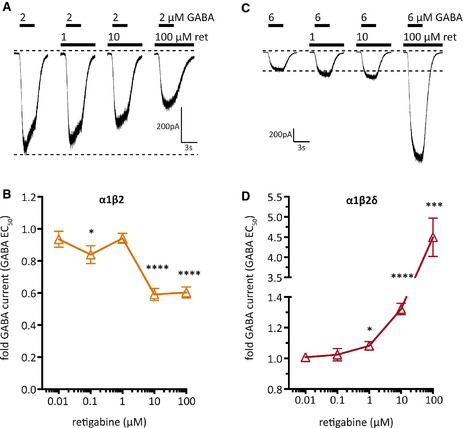 Retigabine concentration–response relation for GABA ‐evoked currents through α1β2 or α1β2δ GABA A receptors expressed in tsA 201 cells. Currents were evoked by the application of either 2 μ m ( A and B ) or 6 μ m ( C and D ) GABA (the EC 50 values for α1β2 and α1β2δ receptors, respectively; see Table 1 ), in the presence of either solvent or the indicated concentrations of retigabine (ret). ( A , C ) Original traces of currents evoked by GABA in a cell expressing either α1β2 ( A ) or α1β2δ ( C ). ( B , D ) Concentration–response curves for the effect of retigabine on GABA ‐induced currents in cells expressing either α1β2 ( B ; orange) or α1β2δ ( D ; red). Peak current amplitudes determined in the presence of the indicated concentrations of retigabine were normalized to the amplitudes obtained in the presence of solvent (n = 8). *, ***, **** indicate significant differences versus the amplitudes obtained in the presence of solvent at p