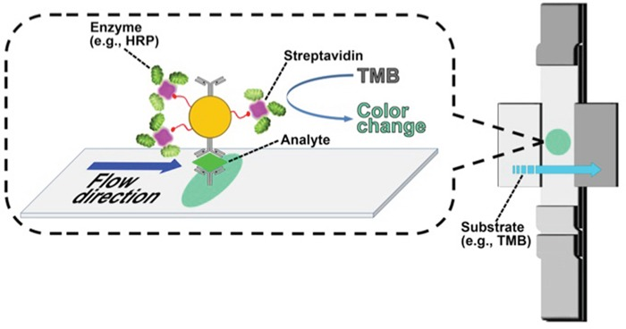 Scheme of enzyme-enhanced LFIC for VCP detection <t>Biotinylated</t> gold nanoparticles tethered with streptavidin-bearing HRP at the capture site in the lateral flow strip to generate a signal upon interaction with TMB.