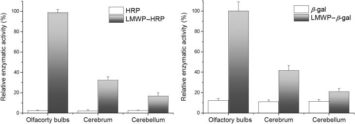 Enzymatic activity of HPR (left panel) and β -gal (right panel). LMWP-linked proteins were represented by grey bars, and native proteins white bars. LMWP-enzymes were significantly higher than their non-modified counterparts ( n =3).
