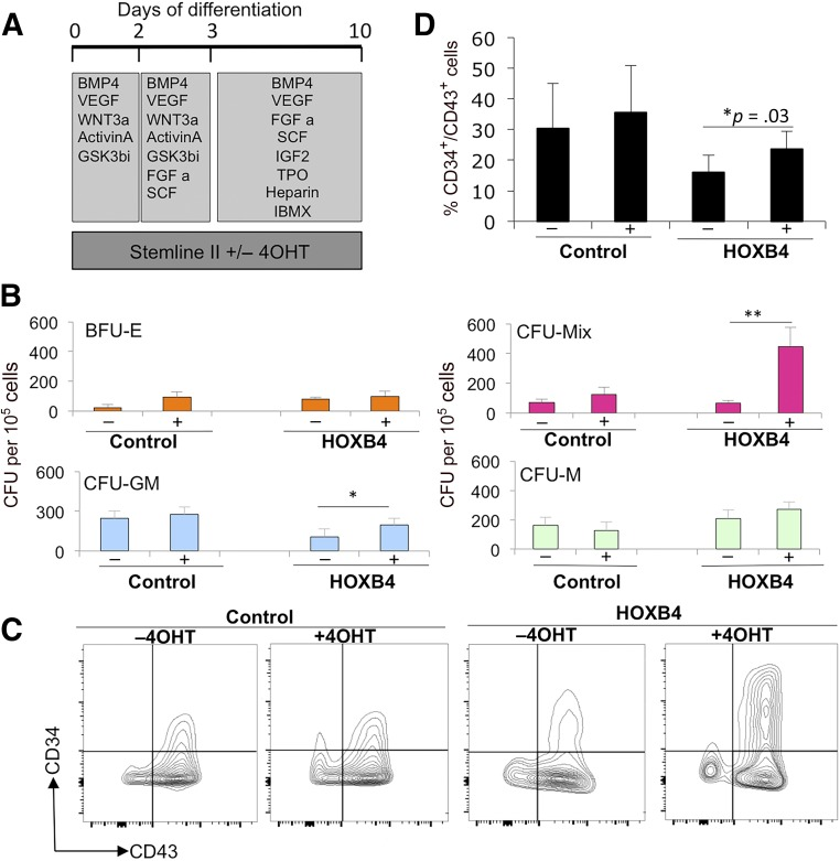 Activation of HOXB4 enhanced the production of hematopoietic progenitors. Tamoxifen (labeled + or −) was added to cultures to activate HOXB4 in H1 human embryonic stem cells (hESCs) expressing HOXB4-ER T2 (labeled HOXB4) or parental H1 hESCs (labeled control) between days 0 and 10 (A) and then assessed for CFU-C activity (B) and expression of hematopoietic progenitor markers, CD34 and CD43, by flow cytometry (C, D) . Data were generated from four independent experiments, with error bars representing SEM. ∗, p = .03; ∗∗, p = .04. Abbreviations: 4OHT, tamoxifen; BFU-E, burst-forming unit erythroid; BMP4, bone morphogenetic protein 4; C, cell; CFU, colony-forming unit; FGF a, fibroblast growth factor-α; GM, granulocyte macrophage; GSK, glycogen synthase kinase; IBMX, isobutylmethylxanthine; IGF2, insulin-like growth factor 2; M, macrophage; Q, quartile; SCF, stem cell factor; TPO, thrombopoietin; VEGF, vascular endothelial growth factor.