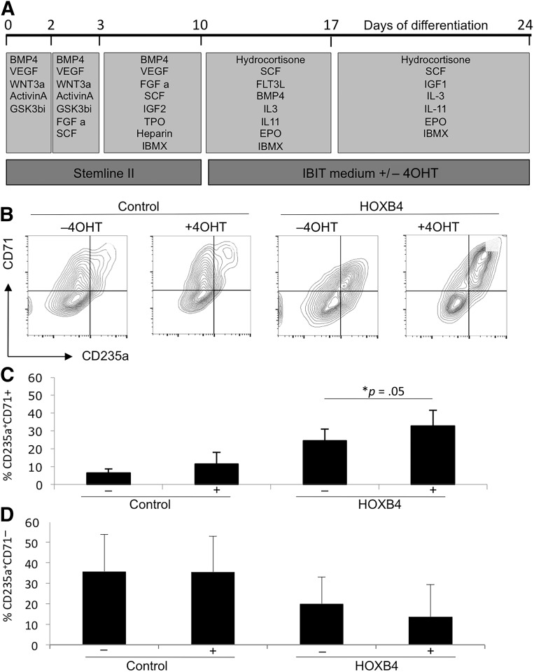 Activation of HOXB4 resulted in a modest increase in the proportion of immature CD235a + /CD71 + erythroid cells. HOXB4 was activated with 4OHT from days 10 to 24 (A) . Production of erythroid cells was monitored by expression of CD235a and CD71 by flow cytometry at day 24 (B–D) . Data were generated from four independent experiments with error bars representing the SEM. ∗, p = .05. Abbreviations: 4OHT, tamoxifen; BMP4, bone morphogenetic protein 4; C, cell; CFU, colony-forming unit; EPO, erythropoietin; FGF a, fibroblast growth factor-α; FLT3L, FMS-like tyrosine kinase receptor 3 ligand; GSK, glycogen synthase kinase; <t>IBMX,</t> <t>isobutylmethylxanthine;</t> IGF1, IGF2, insulin-like growth factor 1, 2; IL, interleukin; Q, quartile; SCF, stem cell factor; TPO, thrombopoietin; VEGF, vascular endothelial growth factor.