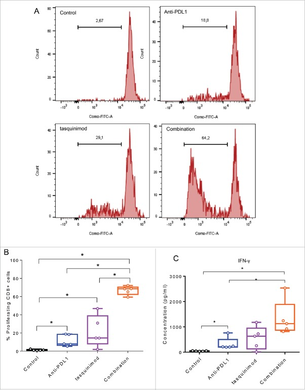 Combining a modulator of infiltrating-myeloid cells and an inhibitor of PD-1/PD-L1 axis increases T cell proliferation and T cell producing IFNγ. Myeloid cells CD11b+ were isolated from tumors using BD FACSAria II (BD Biosciences). T cells were isolated from spleen of naive mice using mouse pan T cell isolation Kit (Miltenyei). CFSE-labeled T cells were stimulated with CD3/CD28 beads ratio 1:1 (Life Technologies). Stimulated T cells were cultured with CD11b+ (at a ratio CD11b:T cells of 1:1) and incubated for 72 h at 37°C. (A) Representative histograms obtained by FACS analysis showing the fluorescence intensity of CFSE-T cells gated on CD8 + . (B) The percentage of proliferating CD8 + cells from the different treated groups is shown. (C) IFNγ secretion in the supernatant of the co-culture is measured 72 h following incubation at 37°C using Luminex Technology. Experiments were repeated twice (Kruskal–Wallis test, * p