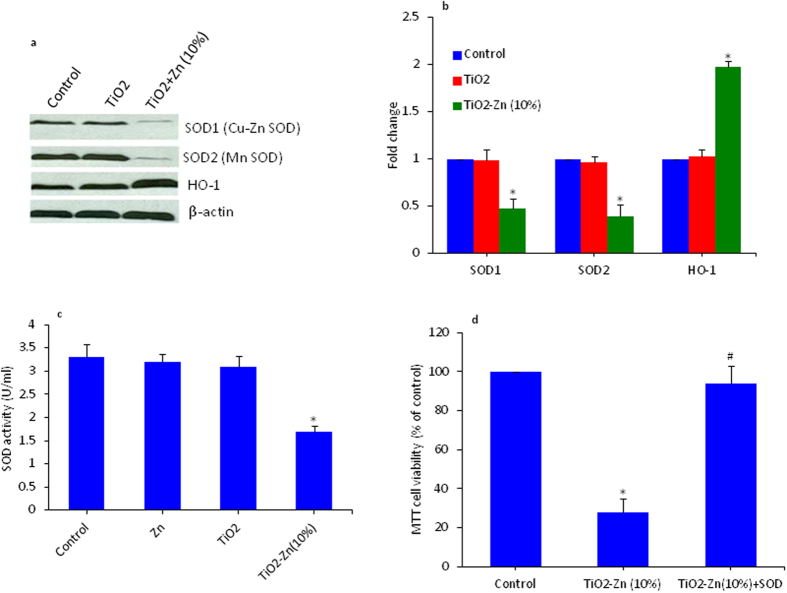 Effect of pure and Zn-doped TiO 2 NPs on superoxide <t>dismutase</t> <t>(SOD)</t> and heme oxygenase 1 (HO-1) genes in MCF-7 cells. ( a ) Western blot analysis of SOD1 (CuZn-SOD), SOD2 (Mn-SOD) and HO-1 protein levels. Cells were treated with 200 μg/ml pure and Zn-doped TiO 2 NPs for 6 h. Cells not exposed to NPs served as a negative control. The treated and untreated cells were lysed in RIPA buffer and cell extract subjected to western blots with anti-SOD1, anti-SOD2 anti-HO-1 antibodies. The β-actin blot is a loading control. ( b ) Protein levels were also analyzed by desitometric analysis using AlphaEase TM FC StandAlone V.4.0.0 software. Results are expressed as a fold change over the control group. ( c ) SOD enzyme activity in MCF-7 cells after exposure to pure and Zn-doped TiO 2 NPs. Cells were treated with 200 μg/ml of pure and Zn-doped TiO 2 NPs as well as pure Zn NPs for 6 h. SOD activity was expressed in terms of U/ml. ( d ) SOD enzyme extract attenuates Zn-doped TiO 2 NPs induced cytotoxicity. Cells were treated with 200 μg/ml of Zn-doped TiO 2 NPs in the presence or absence of SOD enzyme extract. Data represented are mean ± SD of three identical experiments made in three replicate. *Significant difference as compared to the control (p