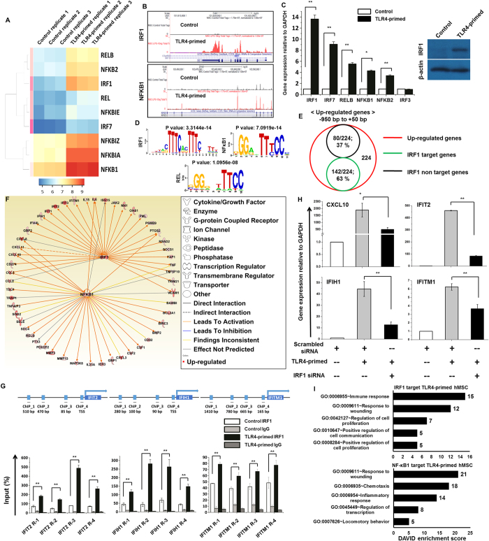 Transcriptomic analyses of selected TF families in TLR4-primed hMSCs. ( A ) Heat map representing differential expression of NF-κB TF families IRF1, and IRF7. ( B ) UCSC Genome browser images representing normalized RNA-seq read densities for TF expression in TLR4-primed vs. control hMSCs. ( C ) Confirmation of differentially expressed TFs by quantitative reverse transcription-polymerase chain reaction and western blotting in TLR4-primed hMSCs (* P